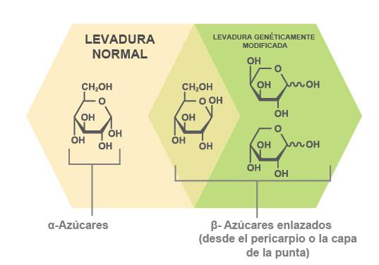ICM usa una levadura genéticamente modificada especial que puede fermentar todos los azúcares.