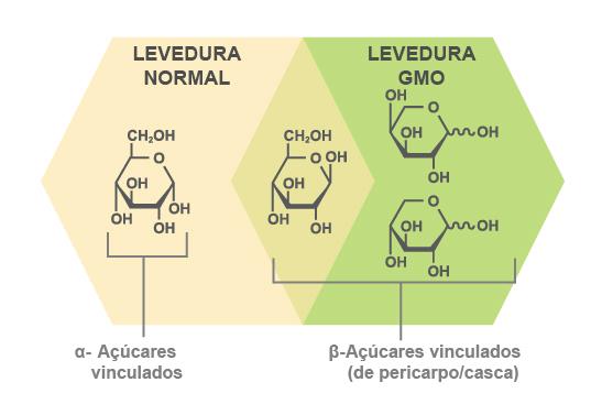 A ICM usa uma levedura especial GMO que pode fermentar todos os açúcares